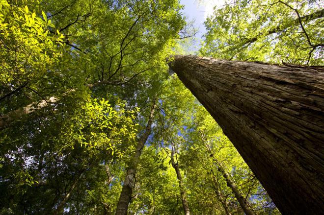 beidler forest 1