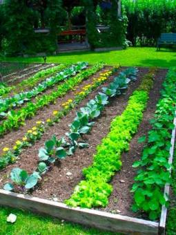 small vegetable garden design, garden, garden ideas