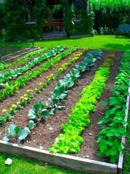 small vegetable garden design, garden, garden ideas